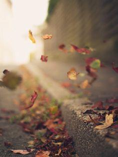 ترحلين يا اوراق  الخريف  مثل البشر   يحزن عليك الشجر  ..... مثل البشر   تضمك الارض  ... مثل البشر   حياتنا واحده   نحن والشجر ...
