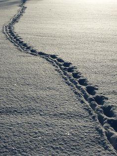 Lumi, Jalanjälkiä, Talvi, Valkoinen