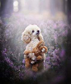 Your Best Friend, Best Friends, Lovely Creatures, Wonderful Places, Cute Dogs, Teddy Bear, Kitty, Toys, Artwork