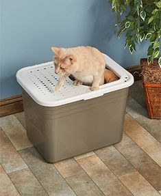 Lovely top Entry Cat Litter Box