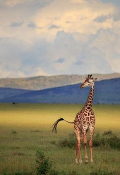 Light on the Mara by Paul Marcellini >> beautiful nature!