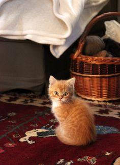 oh, hi kitty