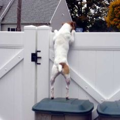 Escape Artist JRT