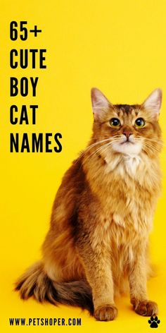 Cute boy cat names for your sweet, little kitten-like: Bravo, Oreo, Leo, Oliver, Emo, Naruto, Drake, Charlie, Felix, Astro, Lucky, Hagrid... #cuteboycatnames #catnamesboy #catnamesmale Boy Cat Names, Cute Cat Names, Kitten Names, Little Kittens, Cats And Kittens, First Time Cat Owner, Homemade Cat Food, Cat Accessories, Cat Facts