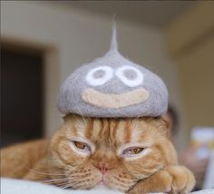 Hats For Cats – 20 Funny Pictures