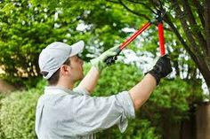 A professional tree removal service provider offers a complete service package: trimming, cut back, removal, stump elimination, clearing the land, in fact disaster clean up. Professional tree removal service Long Island offers you the complete package in reasonable price.