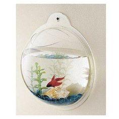 fish bubble...