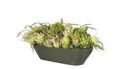 Protea Transitional House, Cabbage, Planter Pots, Vegetables, Floral, Florals, Flowers, Vegetable Recipes, Cabbages