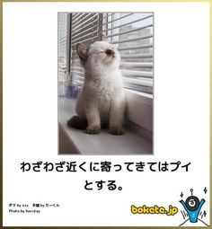 Animals And Pets, Funny Animals, Cute Animals, Funny Comics, Funny Cute, Funny Images, Cats And Kittens, Cat Lovers, Dog Cat