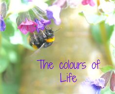 Color Of Life, Bee, Gardens, Inspirational, Colours, Words, Animals, Image, Honey Bees