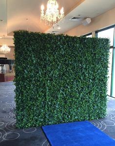 Largest free-standing floral and foliage backdrops for hire Adelaide Cbd, Table Hire, Wedding Wall, Backdrops For Parties, Rustic Chic, Green Wedding, Flower Wall, Event Decor, Ivy