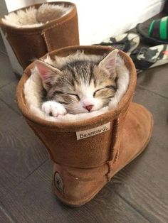 Puss in a boot