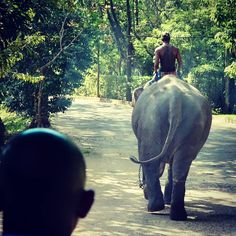 Sri Lanka, Attraction, Horses, Animals, Animais, Animales, Animaux, Animal, Horse