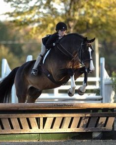 This was me theres nothing better then the feeling when u no ur horse trusts u and u no tht u trust ur horse c: