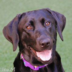 Lily was adopted on 9/19/14!