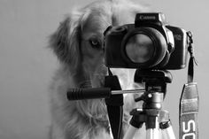 Jessica Trinh is a 18-year old photographer based in South California. She made the following collection of her two dogs: a Golden Retriever named Chuppy and an Australian Shepherd named Daisy. Her target is to show how pet dogs fill very quickly their place in our... #animal #dog #inspiration