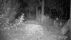 Beech marten captured with maginon camera trap
