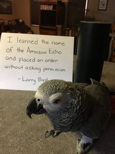 I don't know what's funnier - that the bird did this or that the bird's name is Larry.