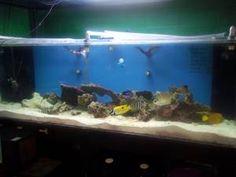 Giant Aquariums: 450 Gallon Acrylic Aquarium - $1500 (Grandville)