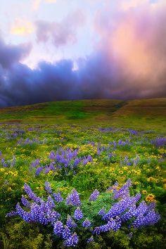 The Dalles Springtime Columbia Gorge, Oregon