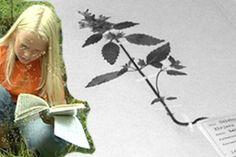 1960-luvulla oppikoululaisten pakollinen kesäläksy oli kerätä kasveja, kuivattaa ne ja koota niistä kasvio. Nyt kasvion kerääminen on taas arkea monelle koululaiselle.
