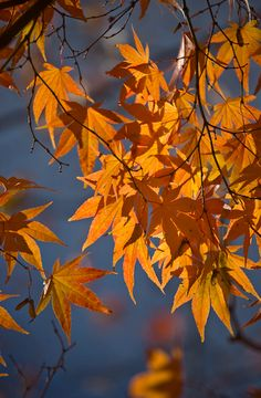Luminescent leaves...
