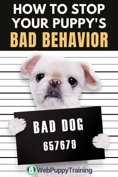Is your dog behaving badly and making your life miserable? Learn how you can stop your dog's bad behavior with these tips for dog training. #dogtrainingtipsaggression #dogtrainingtipsbarking Online Dog Training, Potty Training Tips, Puppy Barking, Animal Attack, Dog Potty, Dog Training Techniques, Best Puppies, Dog Behavior, Dog Owners