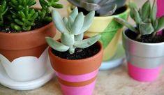 Pots de fleurs couleurs