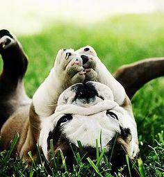 Campaña de Higiene Dental con 25% de descuento sin anestesia. Campaña de esterilización de perros y gatos al 50% en el 683 462 999 Campaña de Vacunación frente a la Leishmania con un 51% de descuento en el 683 462 999