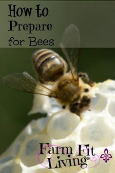 Beekeeping Prep: How to Prepare for Bees