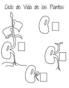La trombosis aguda podkolennoy