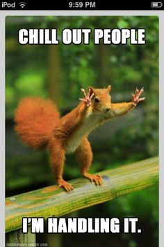 Silly squirrel #funny