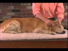 ▶ Small Animal Massage Demonstration - YouTube