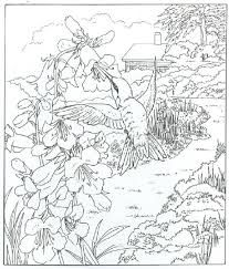 colouring pages for adults - Google Search