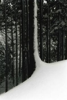 YAMAMOTO, MASAO - Kawa = Flow #1547, snow, tree