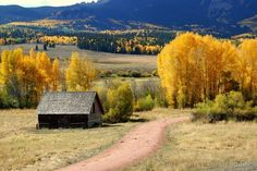 Cabin and yellow trees