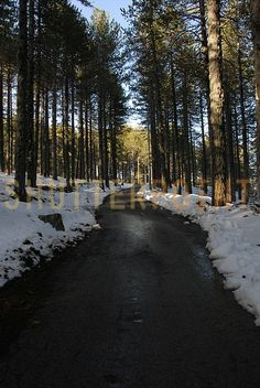 Winter road with snow and sun - Stock Photo