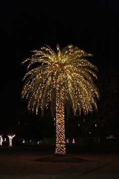 Christmas Palm Tree.  #merry_christmas #palm