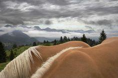 Equus - Tim Flach