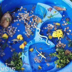 Pond Life Sensory Bin Pond Life, Letter F, Book Suggestions, Sensory Bins, Early Childhood Education, Outdoor Fun, All Things, Preschool, Preschools