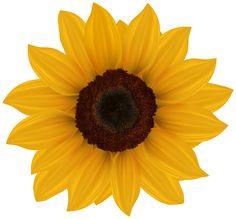 my free clip art of a cute yellow sunflower sweet clip art rh pinterest com sunflower clipart transparent sunflower clipart design free