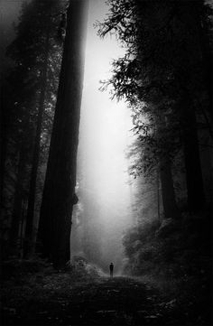 Alone in the Forest Black and white photography Beautiful World, Beautiful Places, Wonderful Places, Belle Photo, Black And White Photography, The Great Outdoors, Wilderness, Mists, Paths