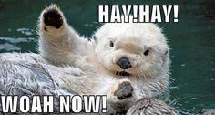Hay! Hay! Woah now!