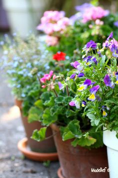 Beautiful container gardening. Even if you have downsized your home, and do not have the room for a big garden, you can still have the beauty and fun container gardening.