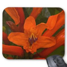 Pomegranate Blooms Mouse Pads by Florals by Fred #zazzle #gift #photogift