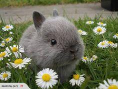 Du schaust aber verdattert! So eine schöne grüne Wiese mit Gänseblümchen, hmm... lecker! Okay, ist alles neu für dich!
