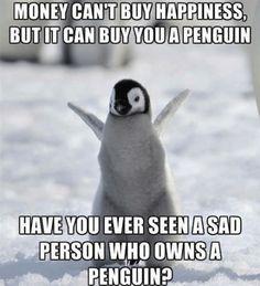 30 Funny Penguin Pics