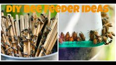 2 Simple  DIY Bee Feeder Ideas | Bee Party At Mumbai Balcony Gardener's !!: Urban Gardening Urban Homesteading Grow Your Own Food How To Garden;A visual treat for bee lovers : The beautiful world of bees upclose and personal . 0:45 A look inside one of my stingless bee hives 1:13 Spot the Stingless Queen Bee 1:27 Spot the Stingless Queen Again 2:07 What can we feed bees during scarcity of their food in nature ? 2:18 Bee Feeder Design no 1  5:48 Bee Feeder Design no 2  6:25 Diluted honey…