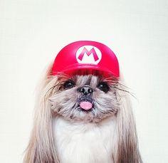 Bé cún nổi tiếng tại Nhật vì các kiểu tóc dễ thương sành điệu