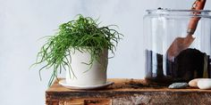 How to Keep Your Succulent Alive: 3 Tips from The Sill on Food52